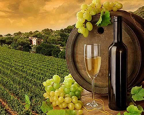 azienda produttrice vino pordenone